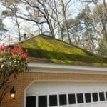 272466538-mossy roof before